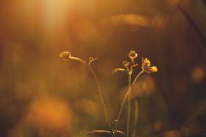 Samen stilvallen ~ Mindfulness voor 'gevorderden' @ De Ondersteuning