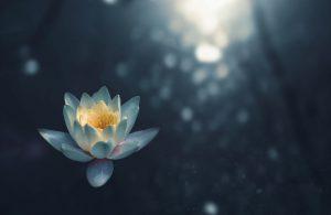 Ont-moeten: mindfulness meditatie @ Studio Zuid
